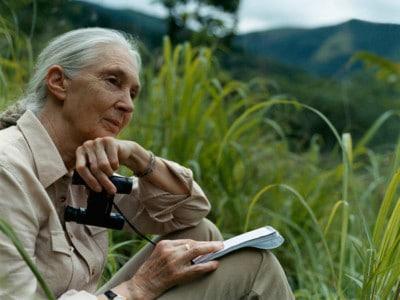 Dr. Jane Goodall – Courtesy of www.janegoodall.org